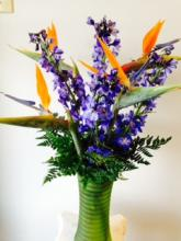 Birds of Paradise & Delphinium