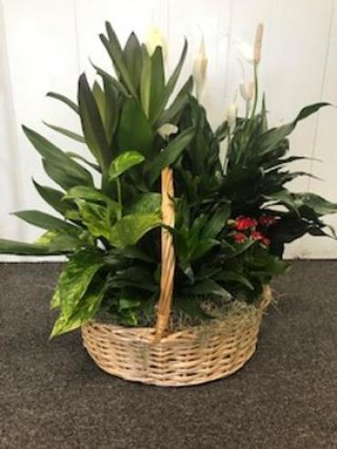 Medium Garden Basket